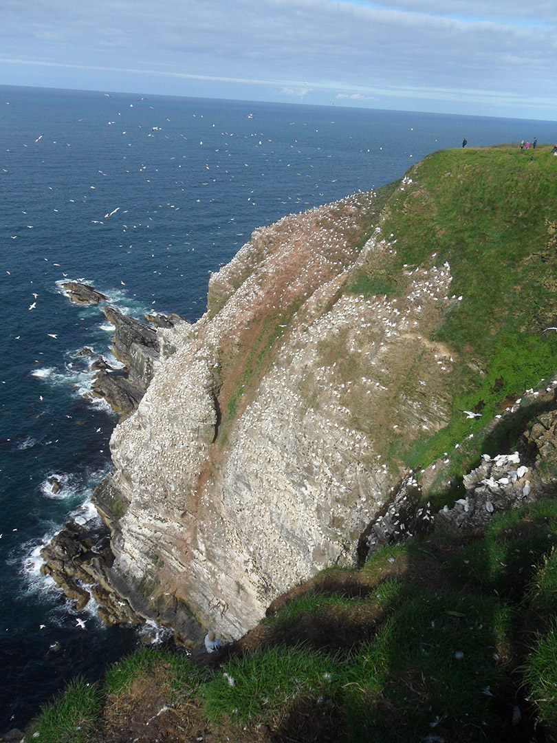 36Cliff of Troup-Head.jpg
