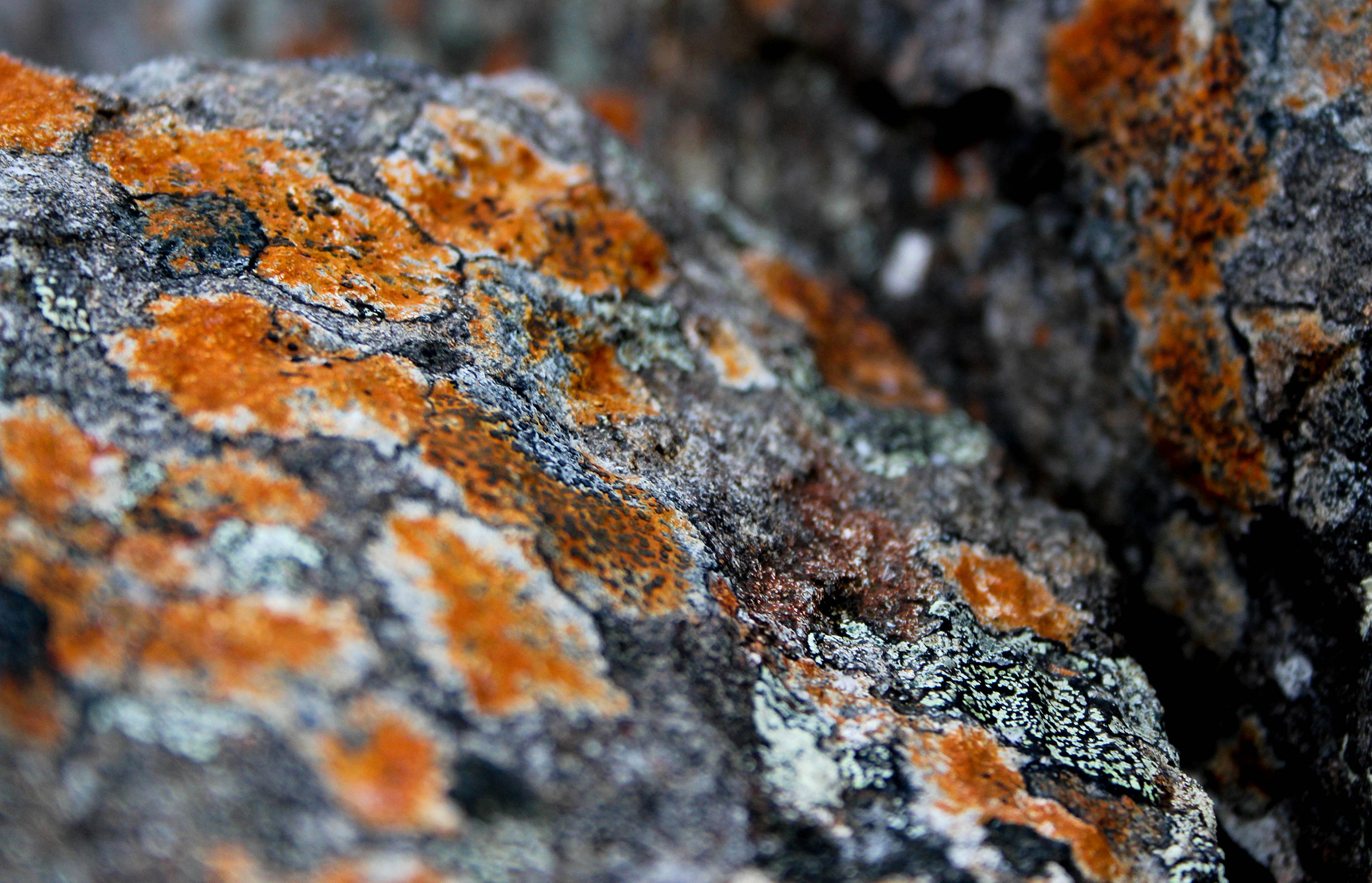 30  all to your own lichens.jpg